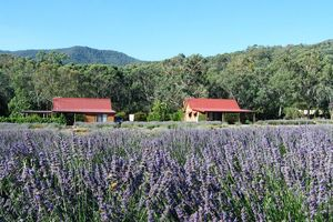Location de vacances - Vue Lavender Cottage - Bright